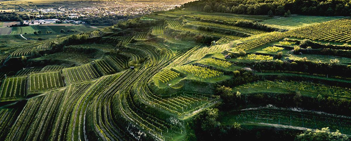 Weingärtnerei Stefan Lang - Landschaftsbild Weingarten Grub